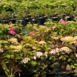 A plant nursery in Brittany - Stockfoto