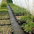 A plant nursery in Brittany - 