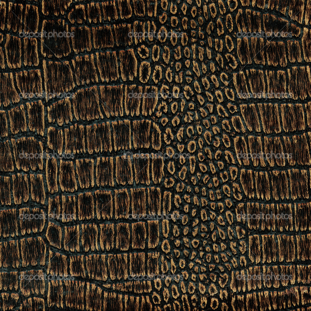 Old crocodile leather — Stock Image © Vilius Vaiciulis #
