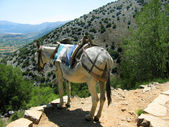Greece, Crete, mule in mountain — Stock Photo