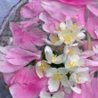 Stock Photo: Jasmin flowers and peon petals floating in water