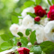 Red and white Tea Roses — Stock Photo