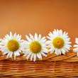 Daisies in a basket — Stock Photo
