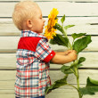 Little Boy with sunflower - Stock Photo