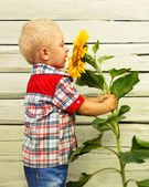 Little Boy with sunflower — Stock Photo