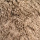 Detailed fur rabbit — Stock Photo