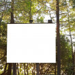 Projection Board in the Woods — Stock Photo