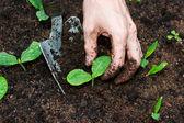 Junge pflanzen wachsen — Stockfoto