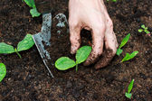 Unga plantor växer — Stockfoto