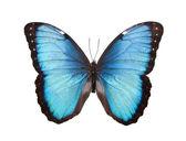 白で隔離される蝶 — ストック写真