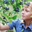 图库照片: Blonde Girl Picking Blueberries