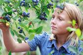 ブロンドの女の子摘みブルーベリー — ストック写真