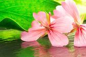 Naturalne piękno — Zdjęcie stockowe