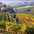 Italian vineyards — Stock Photo #11511330