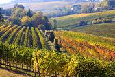 Italské vinice — Stock fotografie