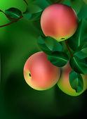 Apple tree vector — Stock Vector