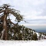 Winter landscape — Stock Photo #11162403