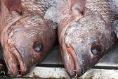 Têtes de poisson vivaneau rouge — Photo