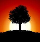 Coucher du soleil avec la silhouette de l'arbre — Photo