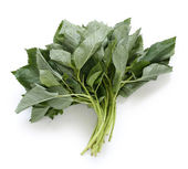 Molokhia, egyptian spinach — Stock Photo