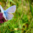 Flower and two butterflies — Stock Photo