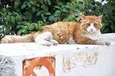 Cat sitting — Stock Photo