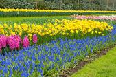 Canteiro de jardim — Foto Stock