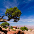 Beautiful mountains and desert landscape with tree and clouds — Stock Photo