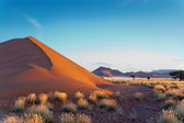 Beautiful sunset dunes — Stock Photo