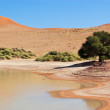 Stock Photo: Namib desert, Sossusvlei, Namibia