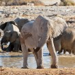 Elephant near waterhole — Stock Photo