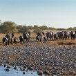 Elephants leaving waterhole - Stock Photo