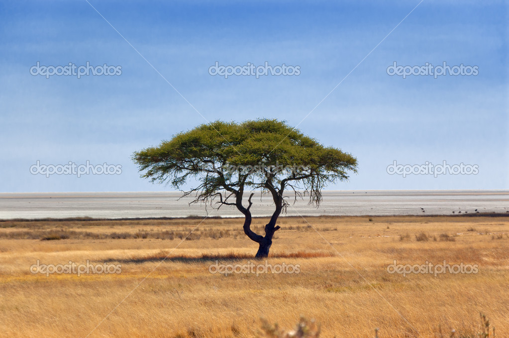 African nature and wildlife reserve, Etosha pan, Namibia — Stock Photo #11960143