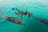 Woman swimming with the Dolphins — Stock Photo