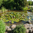 Beautiful classical garden fish pond gardening background - Stock Photo