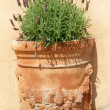 Royalty-Free Stock Photo: Lavender in terracotta pot