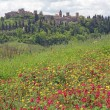 Tuscan landscape in spring — Stock Photo