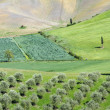 Hilly green tuscan landscape — Stock Photo