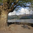 Landscape with bench under huge plane tree - Foto Stock
