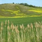 Fantastic tuscan landscape in spring — Stock Photo