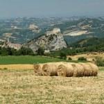 Rural landscape — Stock Photo #11768336