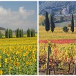 Four seasons in Tuscany — 图库照片