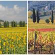 vier seizoenen in Toscane — Stockfoto