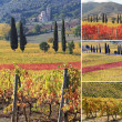Fantastic landscape of tuscan vineyards in autumn — Stock Photo