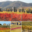 Collage with fantastic landscape of vineyards — Stock Photo #11971935
