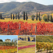 Collage with fantastic landscape of vineyards — Stock Photo