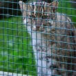 Cat in zoo — Stock Photo #11917451