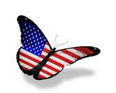 Mariposa bandera volando, aislado sobre fondo blanco — Foto de Stock