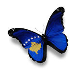 Flag of Kosovo butterfly, isolated on white — Stock Photo