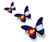 Three Colorado flag butterflies, isolated on white — Stock Photo